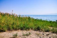 Free Oasis Near The Dead Sea Royalty Free Stock Photography - 26634577