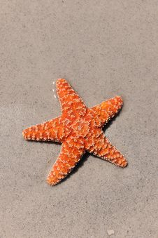 Free Colorful Starfish On Sandy Beach Stock Images - 26634824