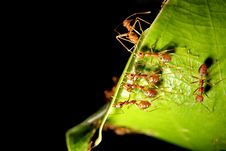 Free Ants Team Working Stock Photos - 26635273