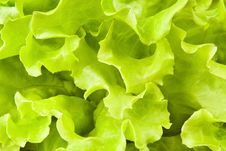 Free Lettuce Leaves Stock Photos - 26636203