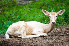 Free Deer Stock Image - 26636811