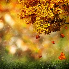 Autumn, Abstract Natural Backgrounds Royalty Free Stock Image