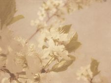Free Vintage Plum Blossom Stock Photography - 26643172