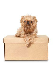 Free Dog On Cardboard Box Stock Photo - 26649380