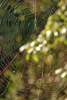 Free Spider S Web. Royalty Free Stock Photography - 26649387