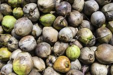 Free Coconuts Stock Photography - 26649752