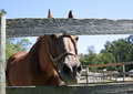 Free Horse Looks Through Corral Fence Stock Photos - 26651183