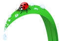 Free Ladybird On A Blade Of Grass Stock Photo - 26653860