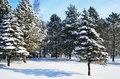 Free Winter Park Covered With Snow Royalty Free Stock Photography - 26655637