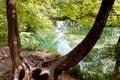 Free Old Dark Tree - Plitvice Lakes, Croatia. Royalty Free Stock Image - 26655836