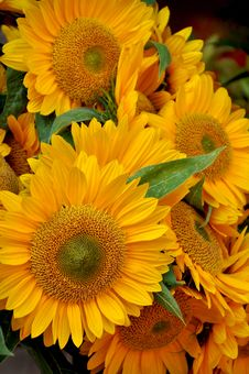 Free Sunflower Bouquet Royalty Free Stock Images - 26650889