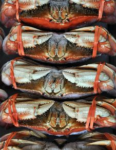 Free Fresh Crab Royalty Free Stock Photos - 26650928
