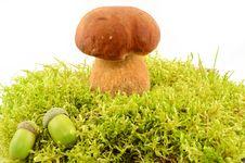 Free Mushroom Stock Photography - 26652192