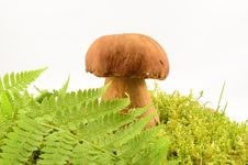 Free Mushroom Stock Photo - 26652220