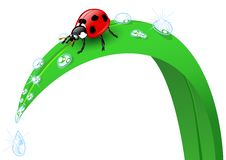 Free Ladybird On A Blade Of Grass Stock Photo - 26653860