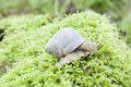 Free Snail Stock Image - 26673891