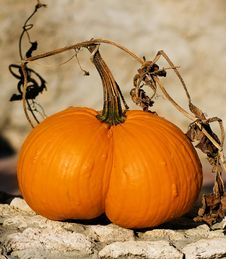 Free Pumpkins Stock Photo - 26671940