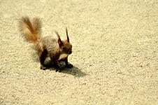 Free Squirrel Stock Photo - 26672190