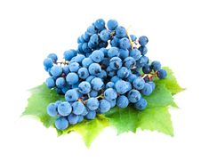 Free Blue Grape Clusters With Leaves Stock Photo - 26675150