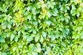 Free Green Leaf Royalty Free Stock Photo - 26687295