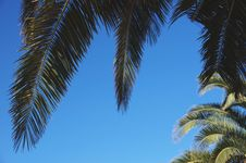 Free Palm Trees, Leaves And Trunks Royalty Free Stock Photo - 26687175