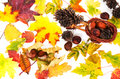 Free Autumn Leaves Stock Photo - 26691430