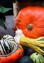 Free Autumn Vegetables Stock Photo - 26698280