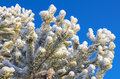 Free Tree In Frost Stock Images - 26698854