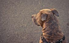 Free Dog Royalty Free Stock Image - 26690106