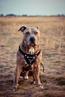 Free Dog Royalty Free Stock Image - 26690116
