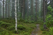 Free Rainy Day At Finnish Countryside Stock Images - 26691074