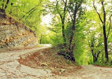 Free Road In Forest Royalty Free Stock Photos - 26693108