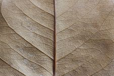 Free Leaf Texture Stock Photography - 26697442