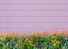 Free Pink Wooden Wall  With Beautiful Green Leaves Royalty Free Stock Photos - 26698248