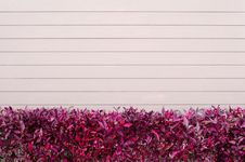 Free Pink Wooden Wall  With  Red  Leaves Stock Photos - 26698313