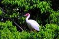 Free Heron Royalty Free Stock Images - 2673989