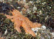 Free Sea Star / Star Fish Stock Photos - 2670063