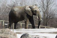 Free Elephant Stock Photo - 2670480