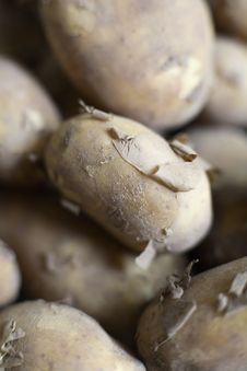 Free Organic Jersey Potatoes Royalty Free Stock Image - 2671206