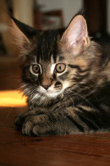 Free Small Kitten Stock Photography - 2671462