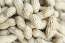 Free Monkey Nuts Royalty Free Stock Image - 2671546