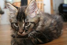 Free Small Kitten Stock Photo - 2671830