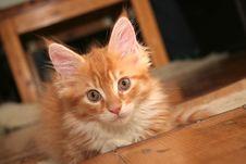 Free Small Kitten Stock Photography - 2671902