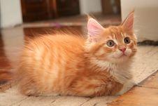 Free Small Kitten Stock Photo - 2671910