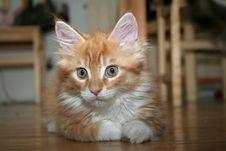 Free Small Kitten Stock Photo - 2671940