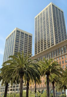 Free Sky Scrapers And Palm Trees Royalty Free Stock Photos - 2672078