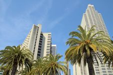 Free Sky Scrapers And Palm Trees Stock Photo - 2672110