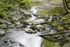Free Forest Stream Royalty Free Stock Images - 2672759