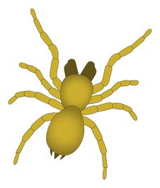 Free Horrific Spider - Vector Royalty Free Stock Images - 2673869