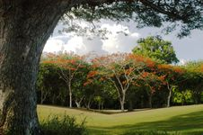 Free Golf Haven Stock Photography - 2675322